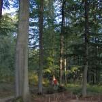 naturalne środowisko rasy konik polski